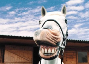 funny-horse_Wallpaper