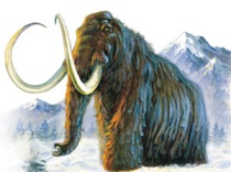 Wooly mammoth and the Sperrins?