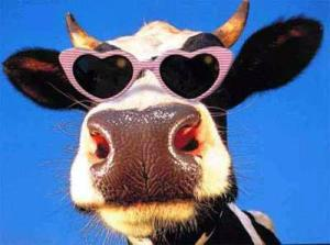 Funny Cow_1