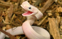 Happy Moy snake