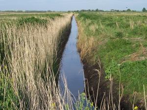 A refreshing ditch in Dregish