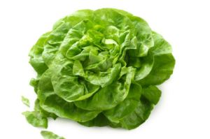 Butterhead lettuce isolated on white