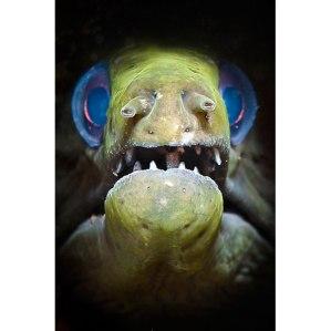 Dolores, the psychic eel