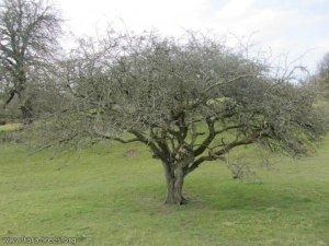 tara_fairy_tree_marta
