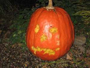 self-carving-pumpkin